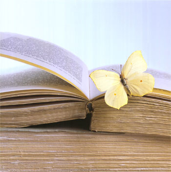 butterfly-on-book