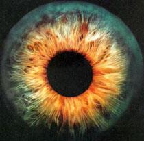 40855-eye1